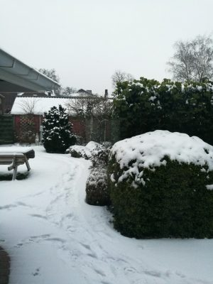 Our garden in the snow