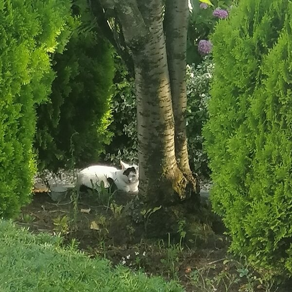 stray cat in our garden