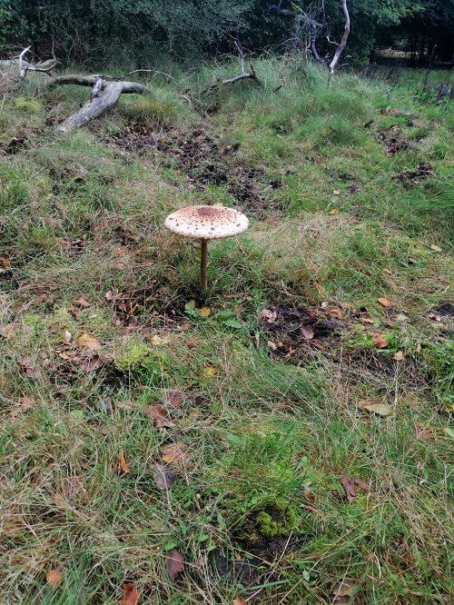 Huge mushroom in the wild