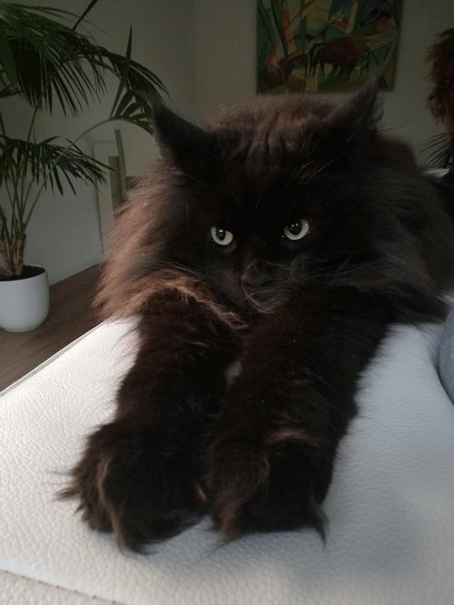 Castor our beloved cat