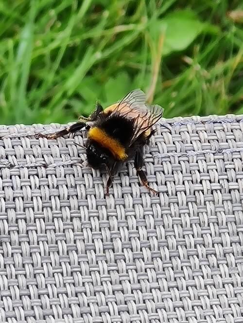 Bee on my sunbed