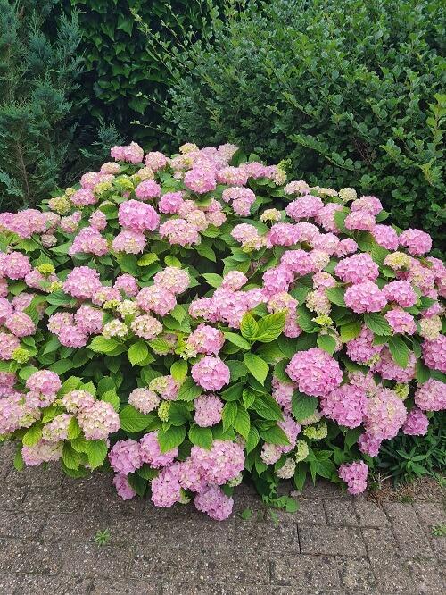 all the flowers in full bloom in my garden