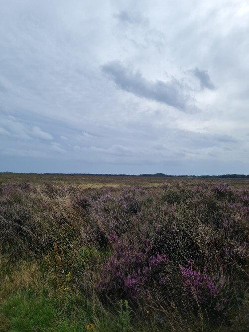 seeing the heather in bloom