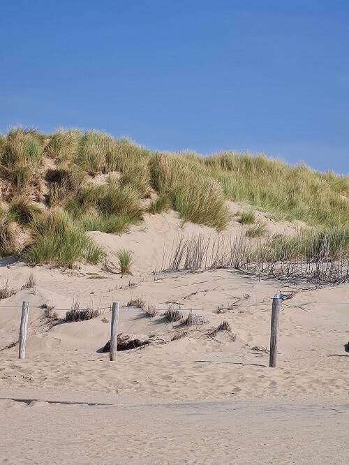 The dunes of Texel